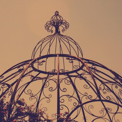cage website 2