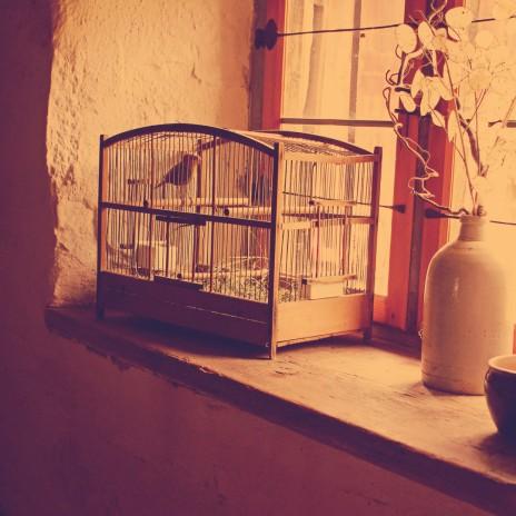 cage website